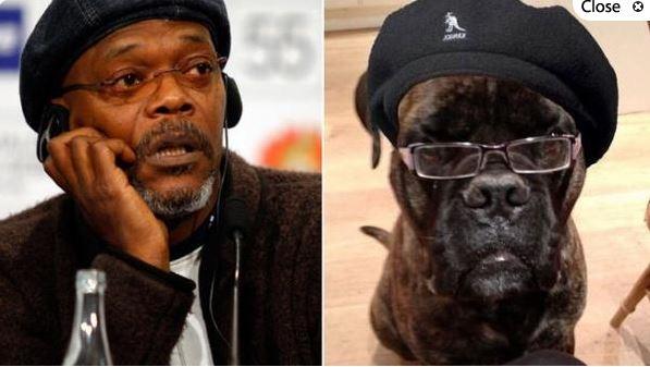 Samuel L. Jackson y un imitador canino