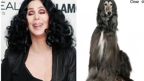 Cher y un perro de raza Afgano