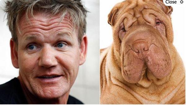 Gordon Ramsay y este perro Shar Pei