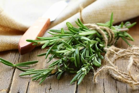 El romero, una hierba ideal para el cabello