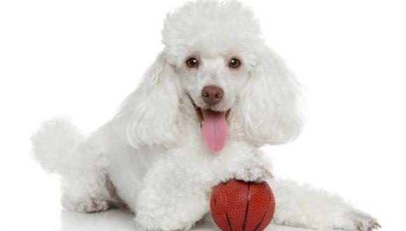 El perro antichavista