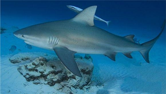 El tiburón quería salir en la foto