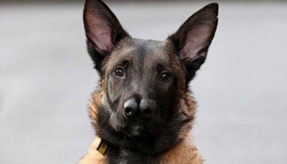 Snuffles es un perro con dos narices