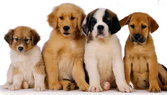 Sorprendentes videos de cachorros