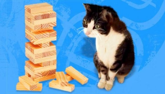 Tierno gatico jugando jenga