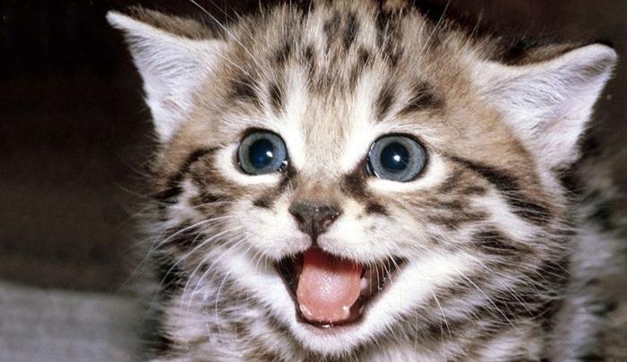 0005 Den6SHbv-animales-sonriendo-animales-graciosos-sonriendo-risa-divertido