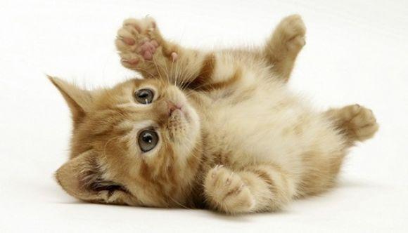 ¿Tu gato será feliz? ¡Averígualo!