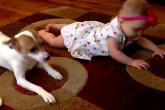 Mascota le enseña a gatear a un bebé