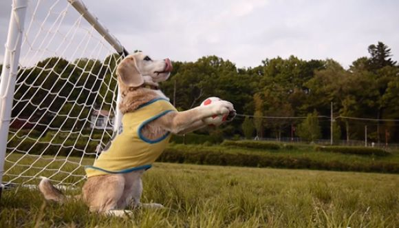 El perrito que le gusta tapar y hacer goles
