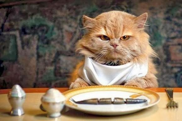 Alimentos que no debe comer tu gato
