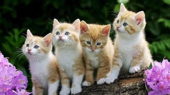 Razones para adoptar un gato