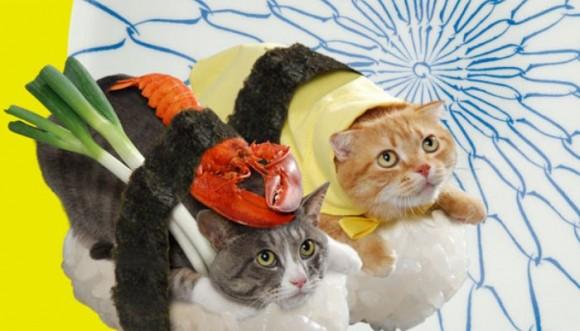 Gatos sushi: tendencia de fotos en redes