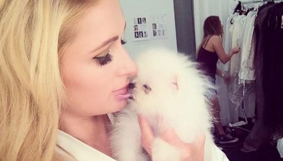 Paris Hilton pagó 13,000 dólares por su nueva mascota