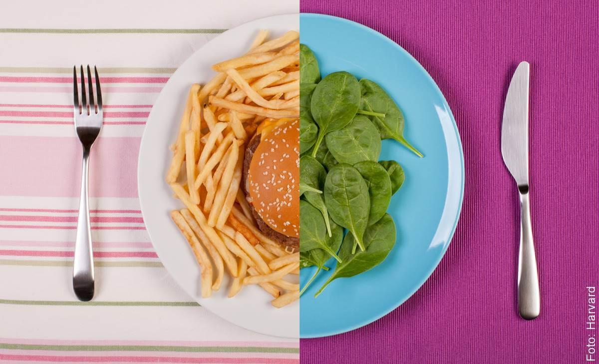 Alimentos para bajar de peso que debes incluir en tu dieta