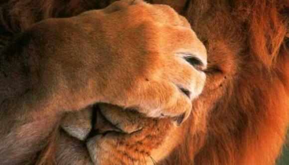La timidez no es una enfermedad, ¡no te diagnostiques a la ligera!