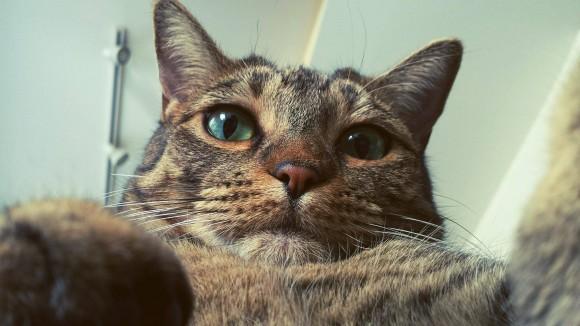 Selfi (no 'selfie') es la palabra del año en español