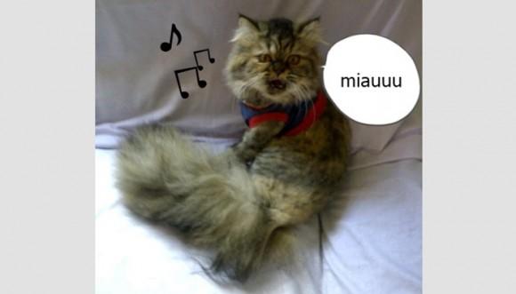 ¿Los gatos pueden cantar a dúo?
