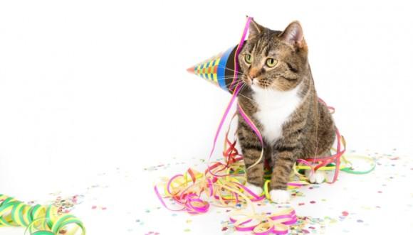 La gata Colette explica por qué hoy se celebra el Día Internacional del Gato