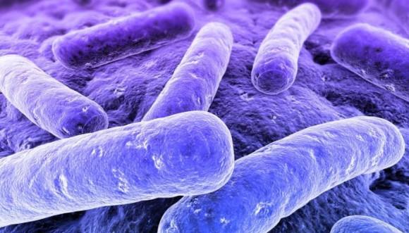 Bacterias ¿buenas o malas?