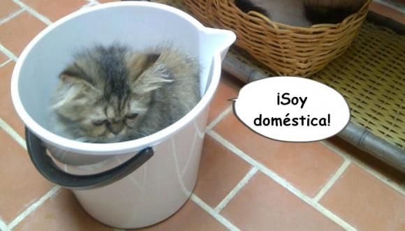 Gatos: los animales más domésticos