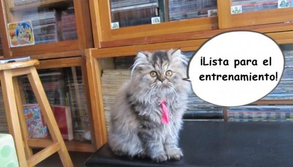 Los gatos también podemos entrenar