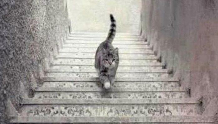 gatosescalera