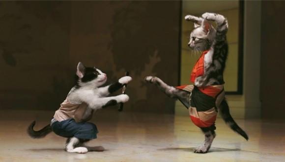Gatos que bailan mejor que tú