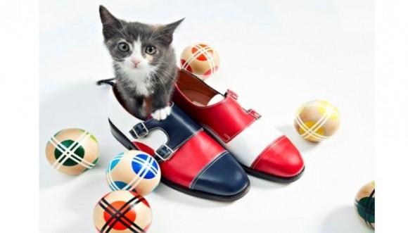 ¿Qué pasa cuando mezclas zapatos con gatitos adorables?