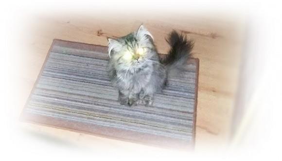 ¿Por qué a los gatos les brillan los ojos, como láser?