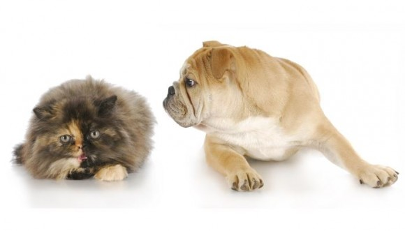 ¿Carro o moto? ¿Perro o gato? ¿Qué es mejor? VibraEncuesta