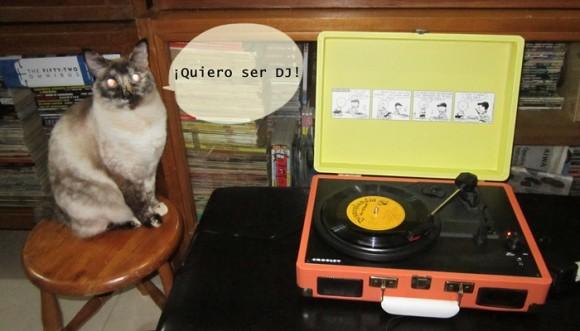 ¿Existen los gatos DJ?