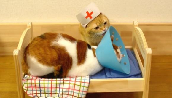 El poder curativo de gatos como yo
