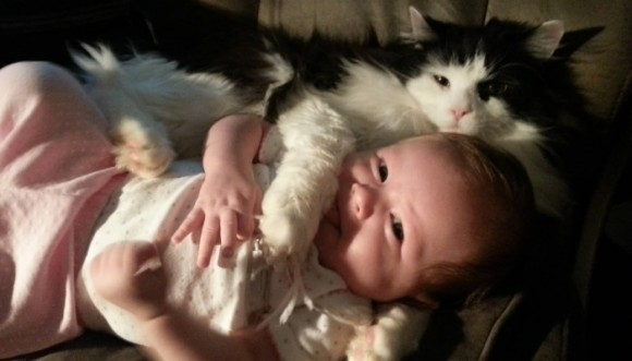 Gatos y bebés... ¡La combinación más tierna!
