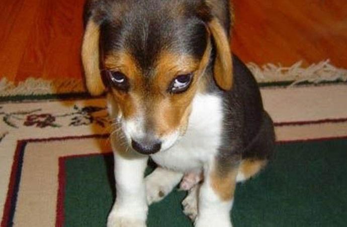 portada perros culpable