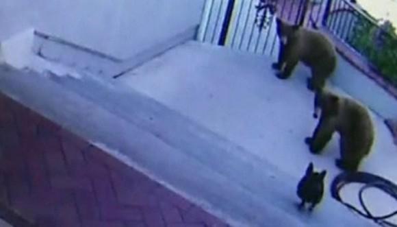 """""""Cuidado con el perro""""... Así seas oso"""