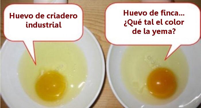comparing eggs