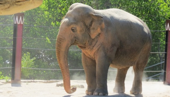 ¿Cómo se mete un elefante en una tina? (Video)
