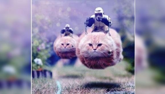 Gatos contra miedo al terrorismo