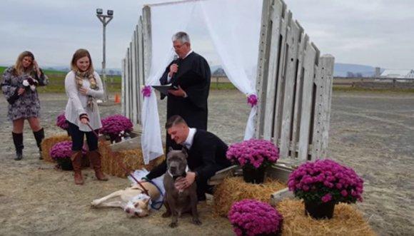 Pit bulls se casaron en elegante ceremonia (Video)