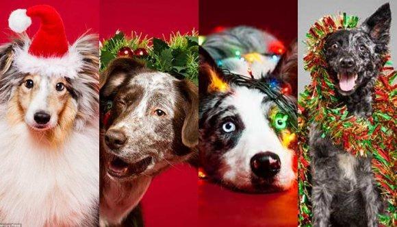 Perros con más espíritu navideño que uno