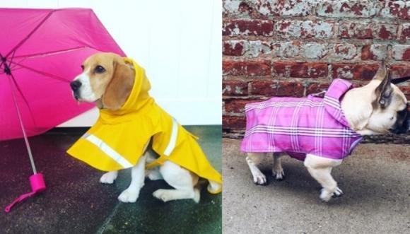 Perros impermeables, ¡la nueva moda en los parques!