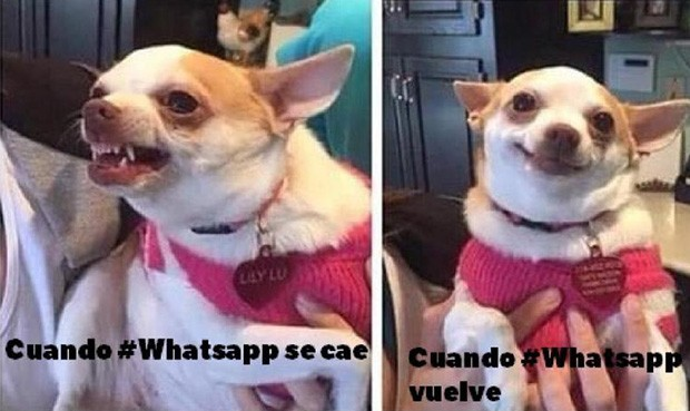 memes caida de whatsapp 3 Noticia 730134