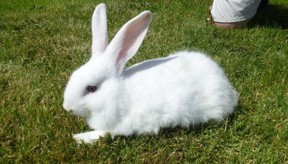 Este tierno conejo que no puede caminar, ¡te hará llorar! (Video)
