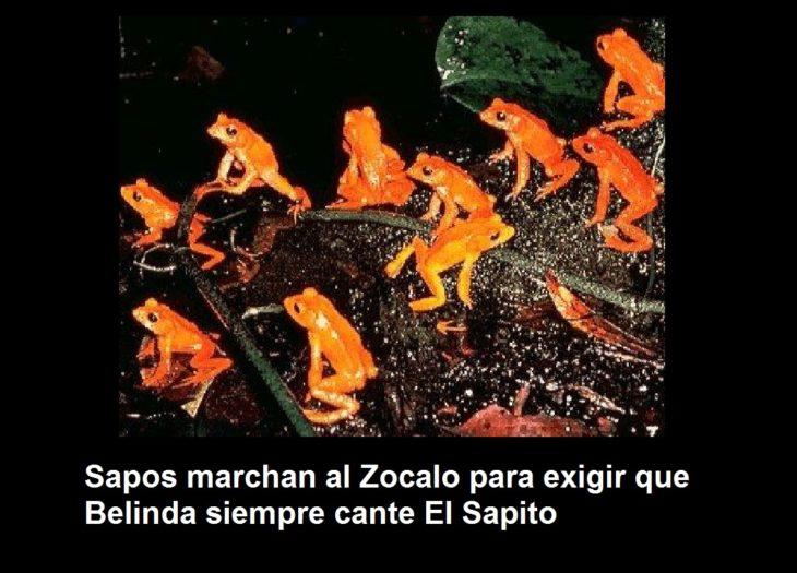 sapito6