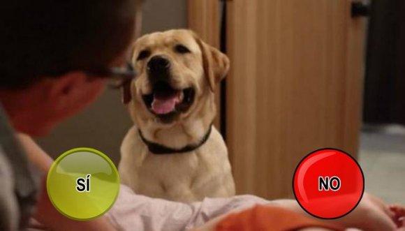 ¿Tienes una mascota voyerista?