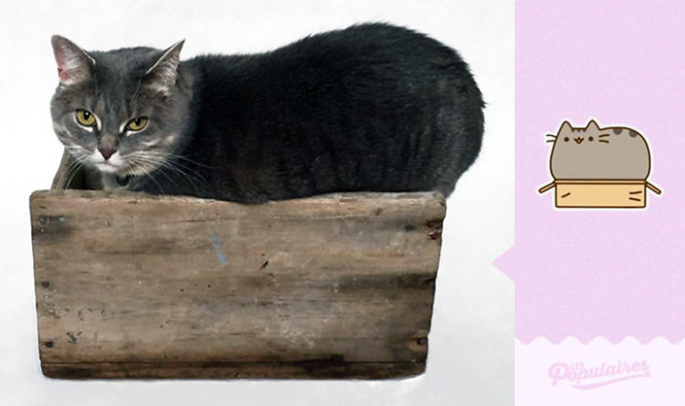 cat recreates pusheen 12