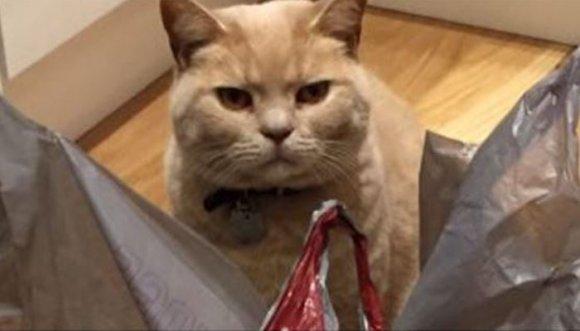 Este gato se cree el dueño del supermercado (Fotos)