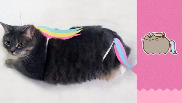 Recrea emoticón Pusheen con su gata, ¡y enloquece internet!