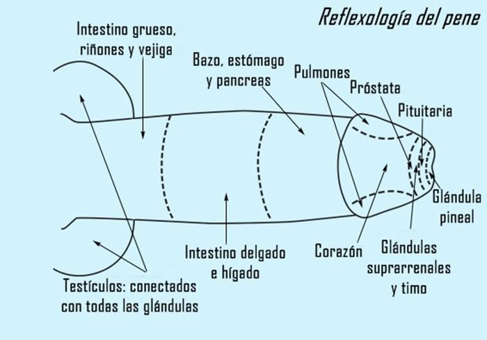 ReflexologiaPene