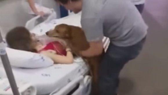El último deseo de esta mujer, despedirse de su mascota (Video)
